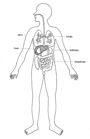 TF-art8-detoxorgans